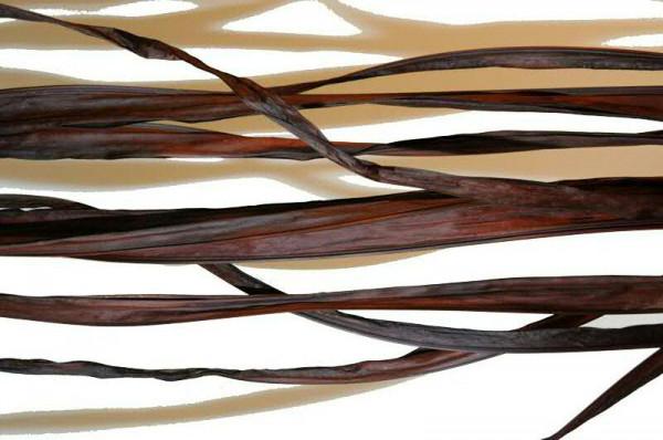 Long Palm SP 10St.200cm, leder