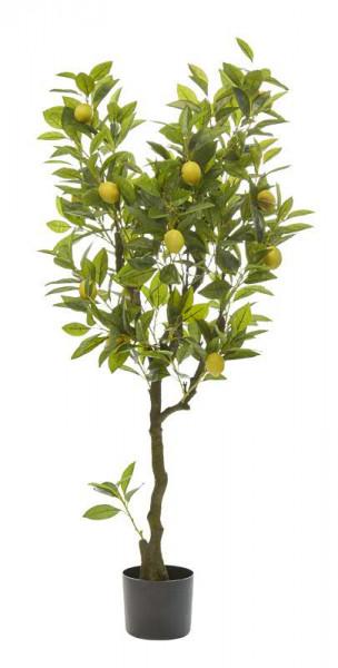 Zitrone im Topf 121cm 15Früchte