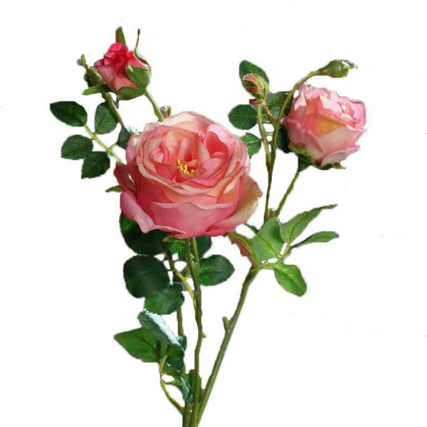 Rose verzweigt 60cm, pink