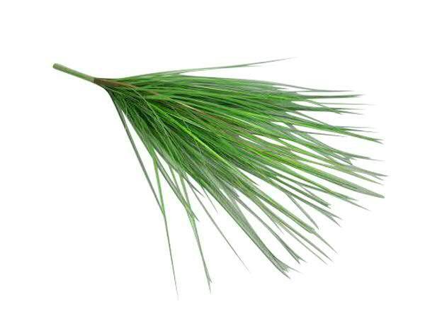 Gras Busch 74cm, grün/braun