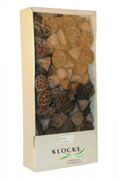 Lotuskolben klein 200St. FPK 4-6cm, natur
