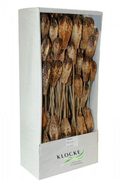 Mehogini am Stiel 100St. FPK, natur