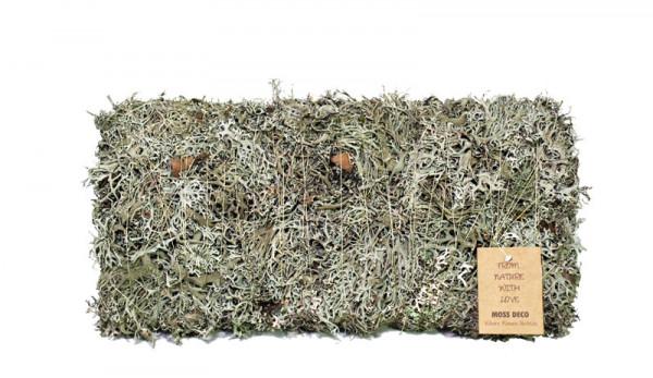 Flechtenmoos Rechteck 38x16cm, natur