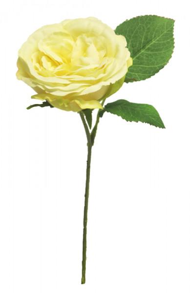 Rose 28cm, gelb