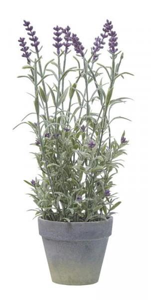Lavendel im Topf 33cm x12, beflockt