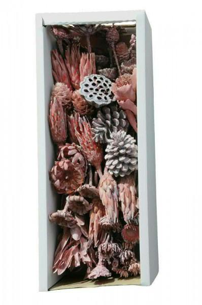 Sortiment Exotica I 50St. frosted FPK, lavendel