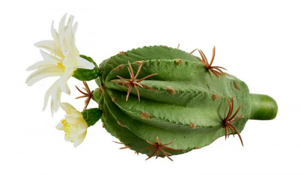Kaktus SP 16cm m.Blüte, grün/weiß