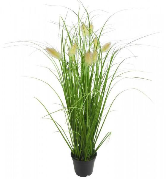 Gras im Topf 58cm mit Fuchsschwanz, grün
