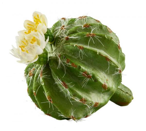 Kaktus SP 10cm m.Blüte, grün/weiß