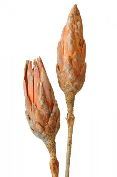 Repens frosted, terracotta