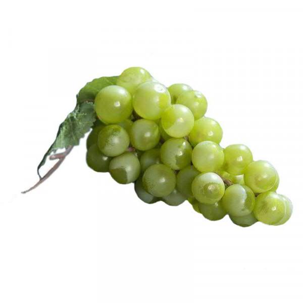 Weintrauben x36 14cm m.2Blättern, grün