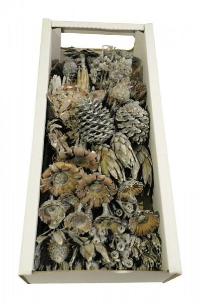 Sortiment Exotica I 50St. frosted FPK, anthrazit