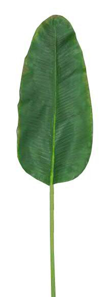 Blatt Banane SP 37/96cm, braun/grün