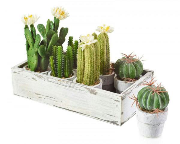 Kaktus im Topf SP 09-13cm 8St.sortiert, grün