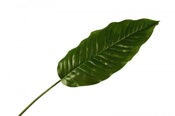 Blatt SP Dieffenbachia 91cm D32cm, grün